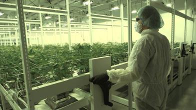 Cannabis: 3 motivi per comprare le azioni di TerrAscend