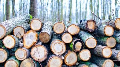 Ribasso del legname: ecco perchè non durerà